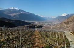 春天在瑞士 葡萄园和山 库存图片