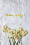 春天在白色工艺纸背景的黄水仙花束 免版税库存照片