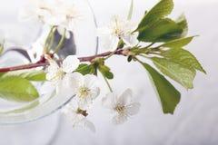 春天在窗口的一个罐开花 免版税图库摄影