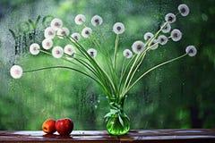 春天在窗口的一个罐开花 库存照片