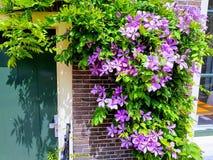 春天在莱顿 库存图片