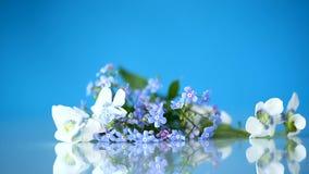 春天在蓝色隔绝的小白色和蓝色花 股票录像