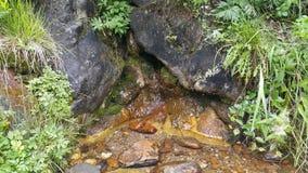 春天在西伯利亚森林里 库存图片