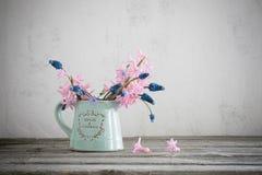 春天在难看的东西背景的蓝色水罐开花 库存图片