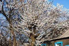 春天在顿涅茨克 图库摄影