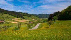 春天在黑森林里 免版税图库摄影