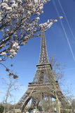 春天在巴黎。艾菲尔铁塔。 图库摄影