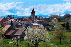 春天在Burkheim在德国 库存图片