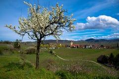 春天在Burkheim在德国 库存照片