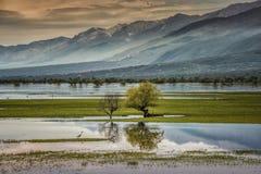 春天在Kerkini湖,希腊 免版税库存照片