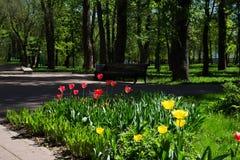 春天在Russia.Moskva河 库存照片