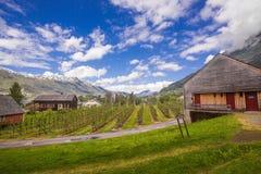 春天在Ulvik,挪威 免版税库存图片