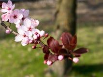 春天城市风景 图库摄影