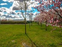 春天城市风景 库存照片