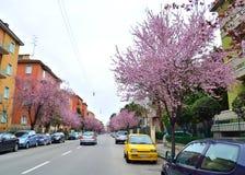 春天城市 免版税图库摄影