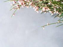 春天复活节笤帚花卉最小的淡色背景 免版税图库摄影
