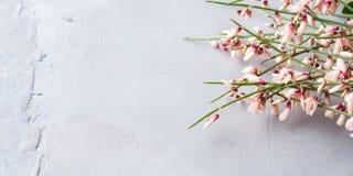 春天复活节笤帚花卉最小的淡色背景 库存图片