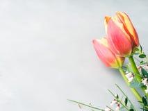 春天复活节郁金香花卉最小的淡色背景 免版税图库摄影