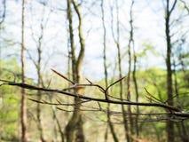 春天夏天与树和分支开花的自然背景 免版税库存图片