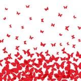春天夏天卡片设计 横幅,在白色背景的红色蝴蝶 向量 向量例证