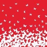 春天夏天卡片设计 横幅,在红色背景的白色蝴蝶 向量 向量例证