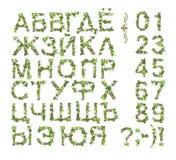 春天夏天字母表和数字由花制成 免版税库存照片