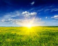 春天夏天背景-开花的领域草甸 免版税库存照片