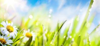 春天夏天花背景;在太阳天空的新鲜的草 库存照片