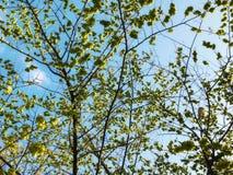 春天天气,晴朗的天空,开花的树在村庄 图库摄影