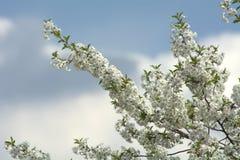 春天天空 库存图片