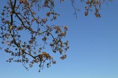 春天天空 库存照片