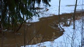 春天小河在森林里 影视素材