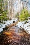 春天小河在森林里 库存照片