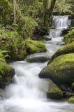 春天小溪流程 库存照片