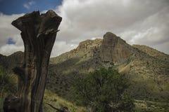 春天峡谷国家公园,新墨西哥 库存图片