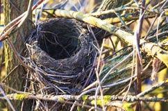 春天巢等待小 库存图片