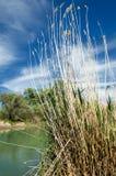 春天干草原的河 免版税库存图片