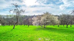 春天庭院、樱花和太阳 影视素材