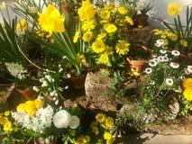 春天庭院在罐的花的布置 免版税库存照片
