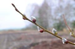 春天开始 库存图片