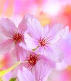 春天开花与桃红色开花的背景 库存图片