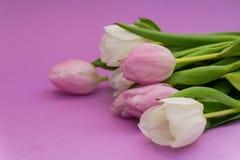 春天开花在淡紫色背景的郁金香 构成 美妙9心情多彩多姿的照片被设置的春天的郁金香 背景,明信片 库存照片