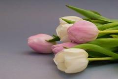 春天开花在灰色背景的郁金香 构成 美妙9心情多彩多姿的照片被设置的春天的郁金香 背景 免版税库存照片