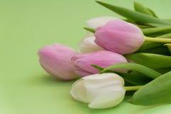 春天开花在绿色背景的郁金香 构成 美妙9心情多彩多姿的照片被设置的春天的郁金香 背景 免版税图库摄影