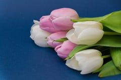 春天开花在蓝色背景的郁金香 构成 美妙9心情多彩多姿的照片被设置的春天的郁金香 背景 免版税库存图片