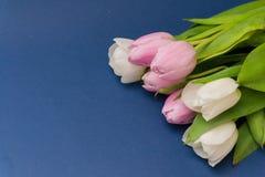 春天开花在蓝色背景的郁金香 构成 美妙9心情多彩多姿的照片被设置的春天的郁金香 背景 图库摄影