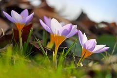 春天开花在阳光下 库存照片