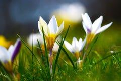 春天开花在阳光下 免版税库存图片