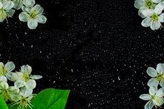 春天开花在黑玻璃的背景与水下落 免版税库存照片