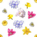 春天开花无缝的背景样式 免版税库存图片